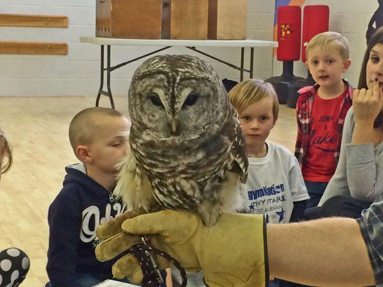 Maine Owl Presentation
